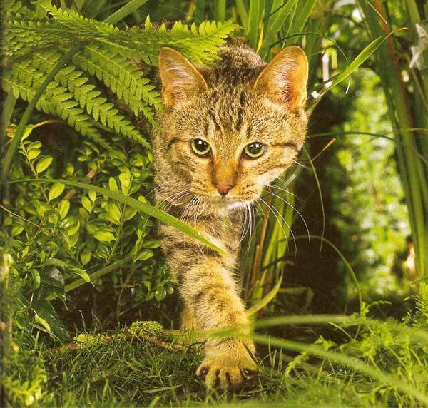 Коты воители картинки самые красивые - 94deb